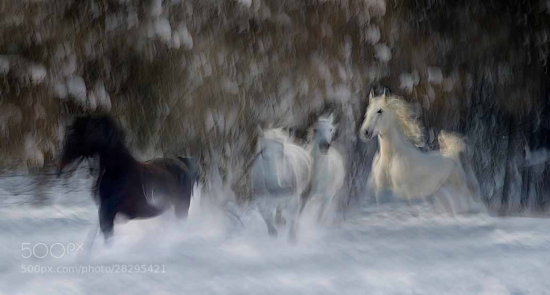 Photograph Joy of winter by Milan Malovrh on 500px