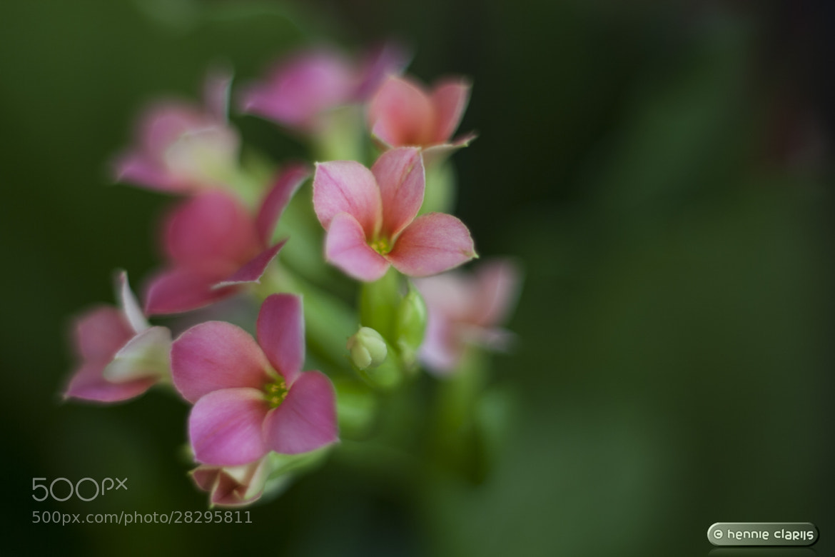 Photograph Stick Together by Hennie Clarijs on 500px