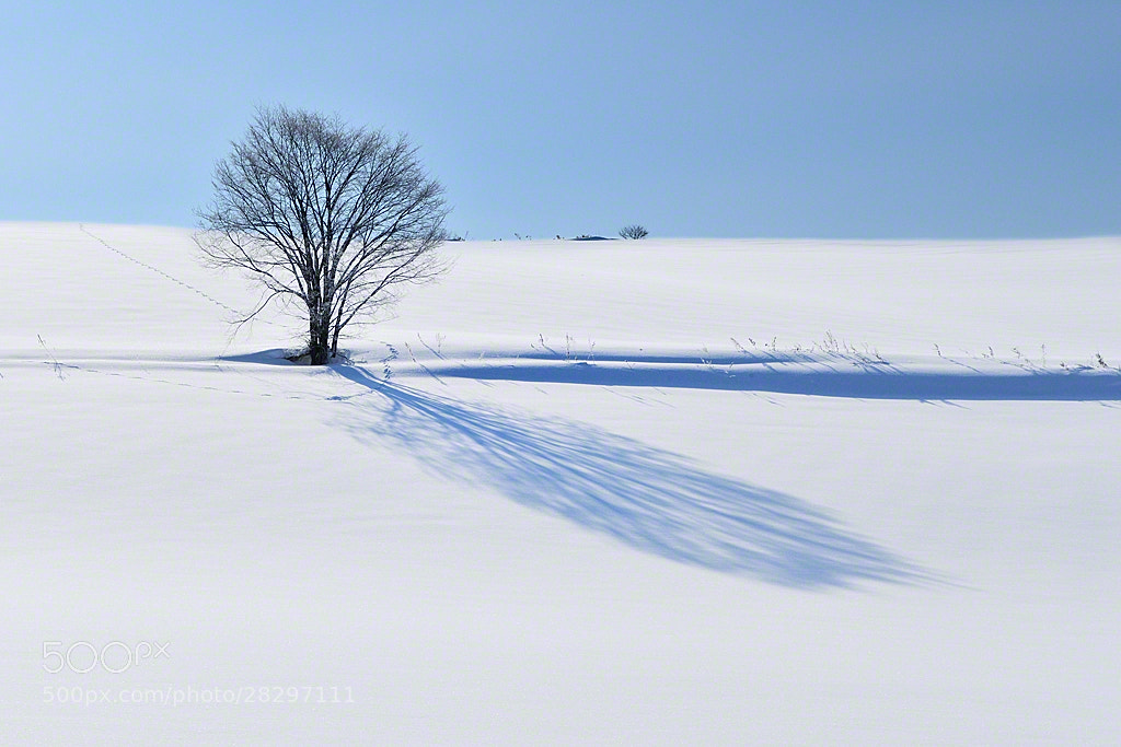 Photograph The Soft Light in March by Kent Shiraishi on 500px