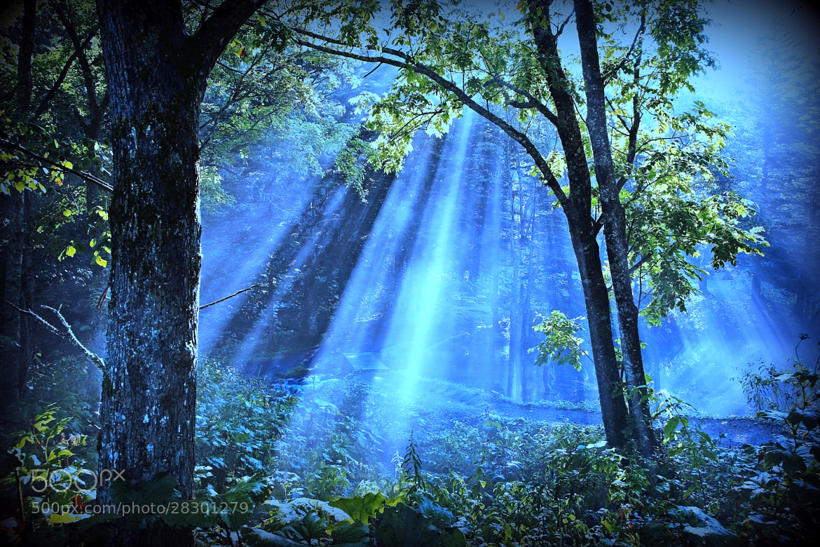 Photograph Shower of light by yume . on 500px