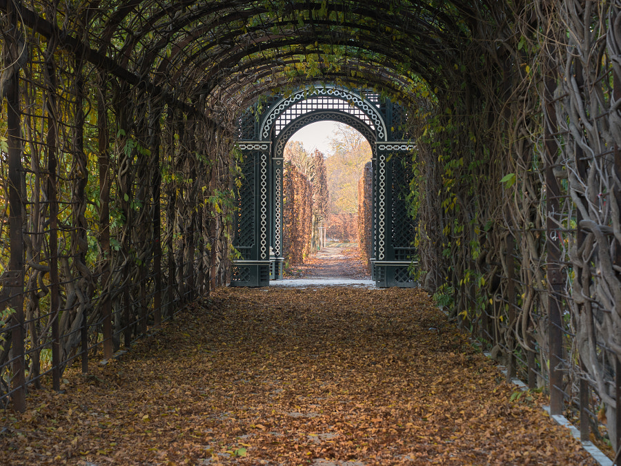 The Entrance to Autumn by Christina Obermaier on 500px.com