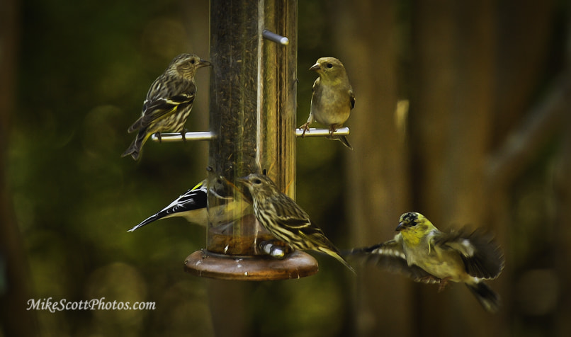 Photograph Full Feeder by MikeScottPhotos  on 500px