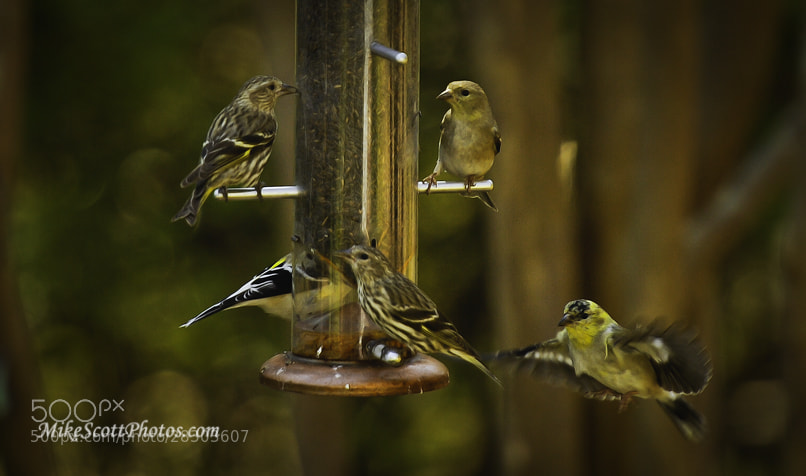Photograph Full Feeder by Mike Scott on 500px