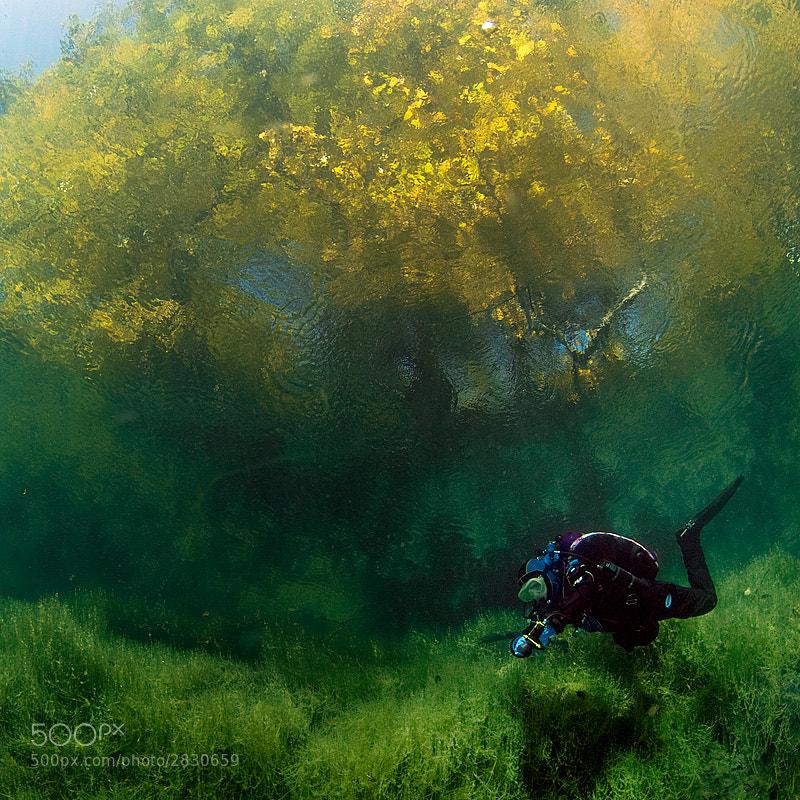 Photograph autumn by Viktor Lyagushkin on 500px