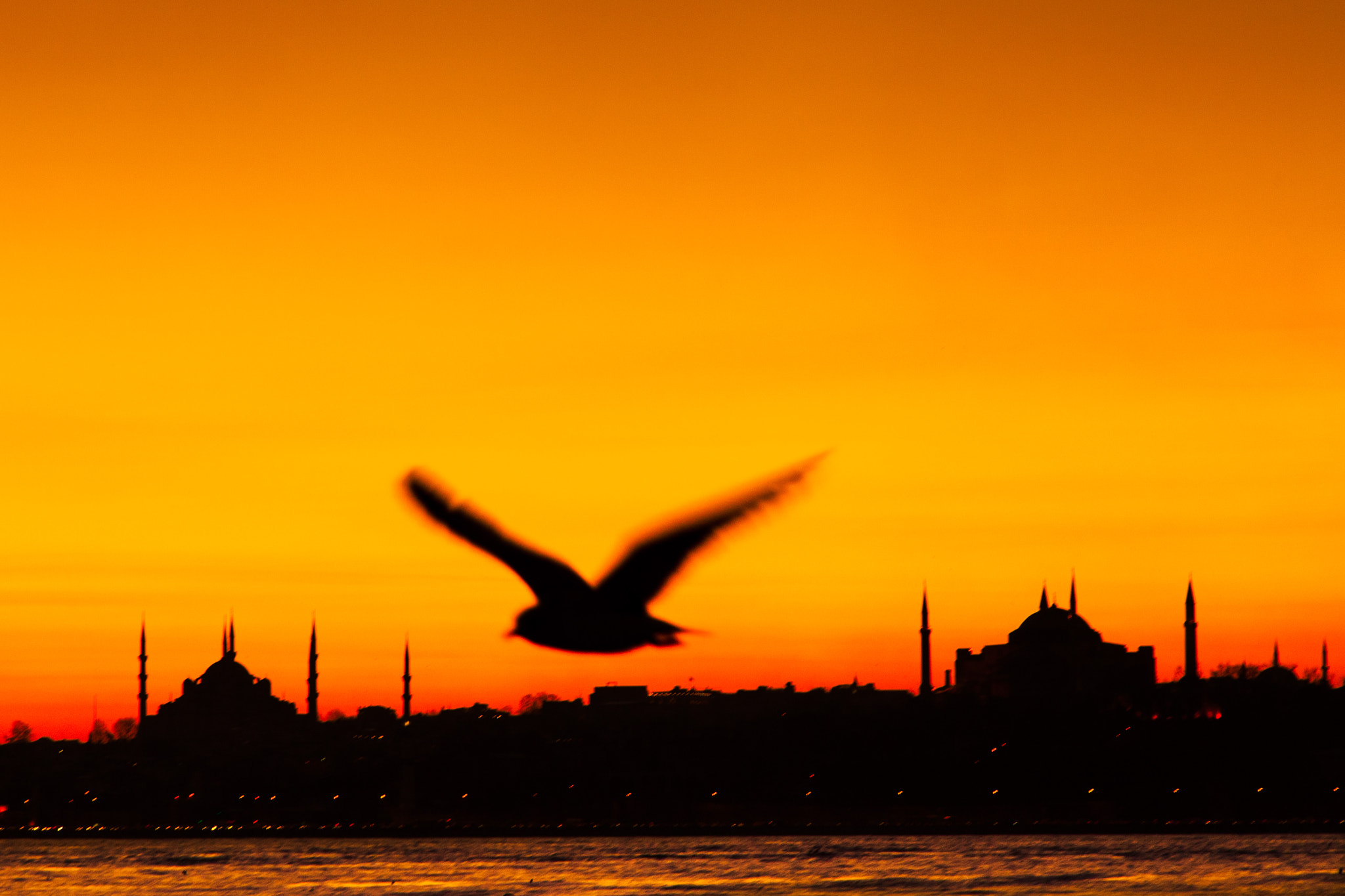 Photograph Old city and the seagull by Masis Usenmez on 500px
