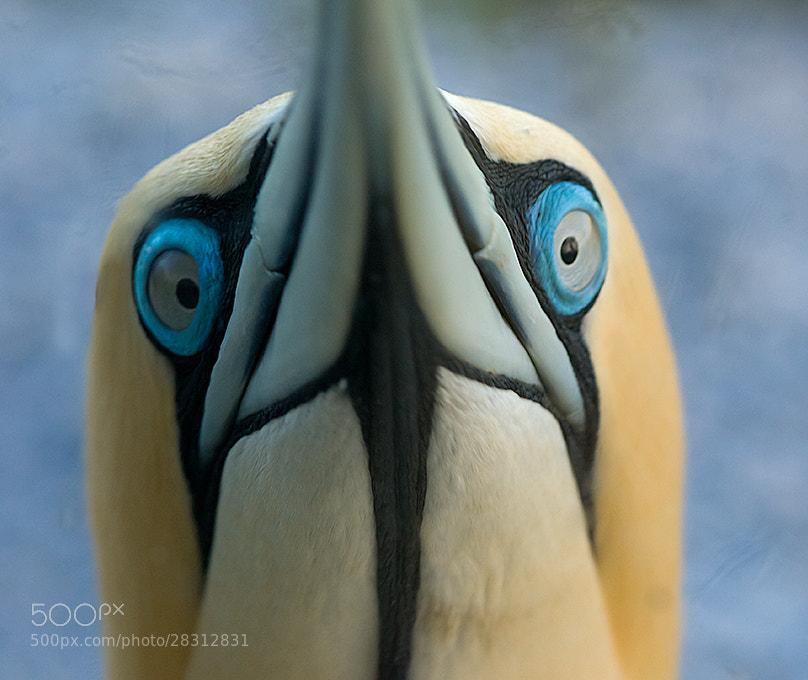 Photograph All Eyes by Bridgena Barnard on 500px