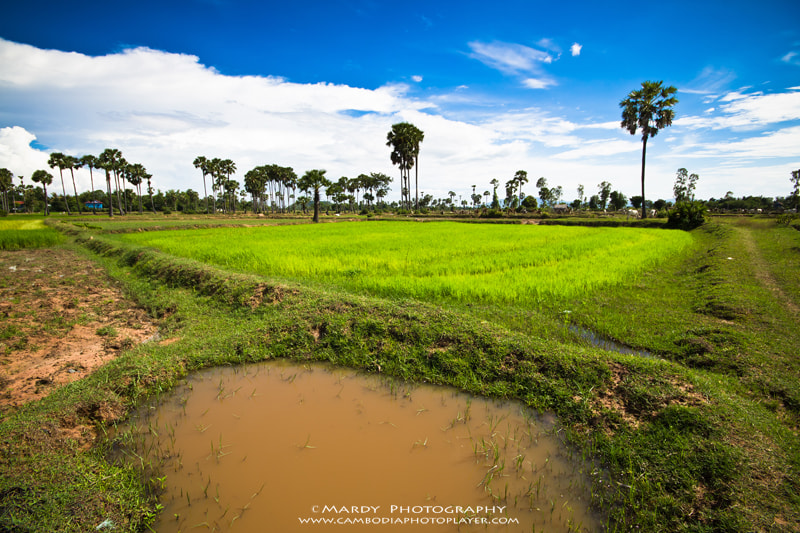 Photograph Get fresh with the rice field! by Mardy Suong Photography on 500px