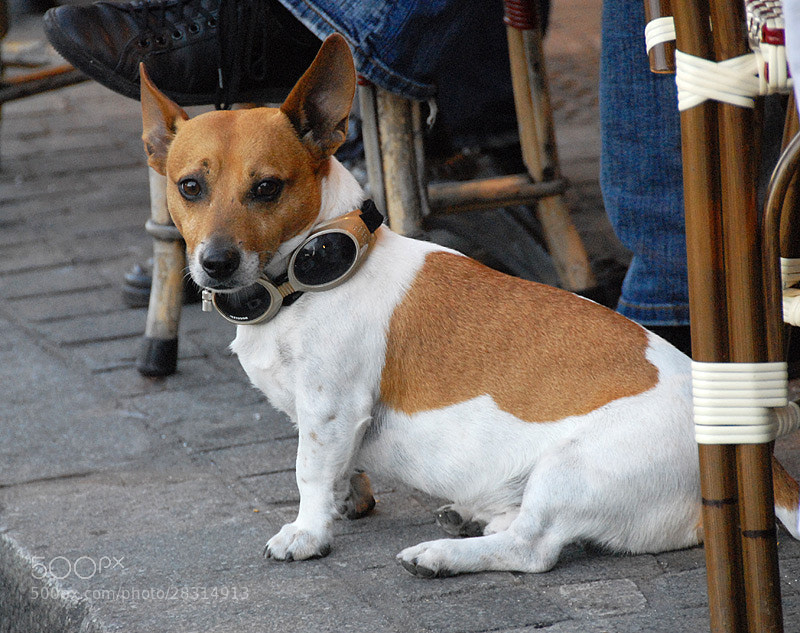 Photograph A DOG WITH STYLE... in HONFLEUR by Magda Indigo on 500px