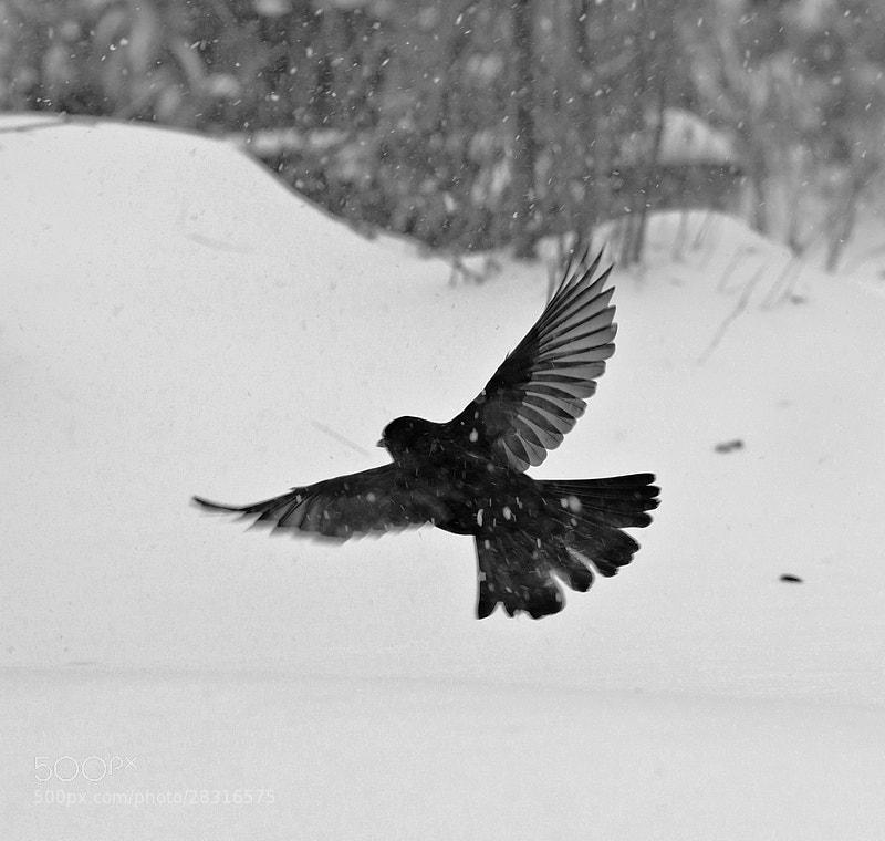 Photograph black by david penez on 500px