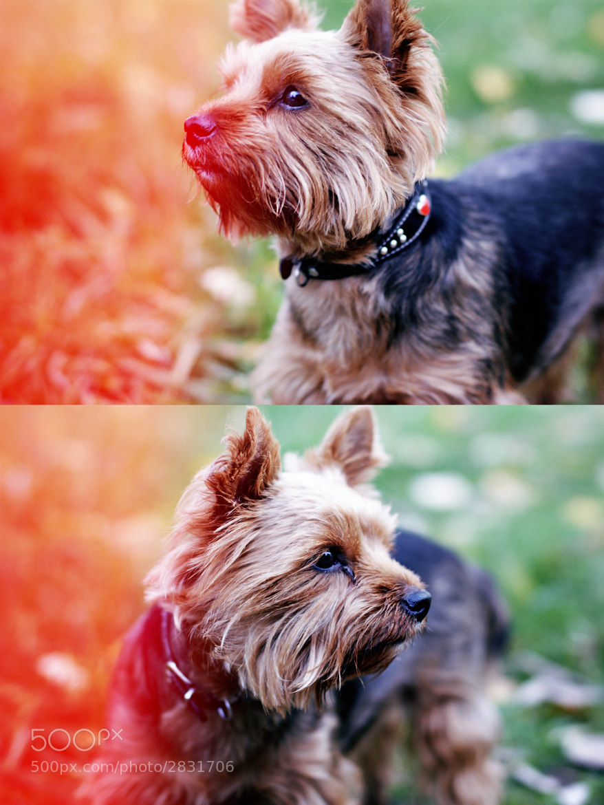 Photograph doggy by Polina Belenchuk on 500px