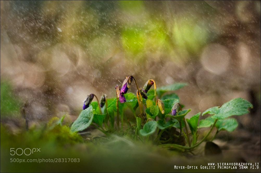 Photograph Pioggia di Primavera by Viera Vodrazkova on 500px