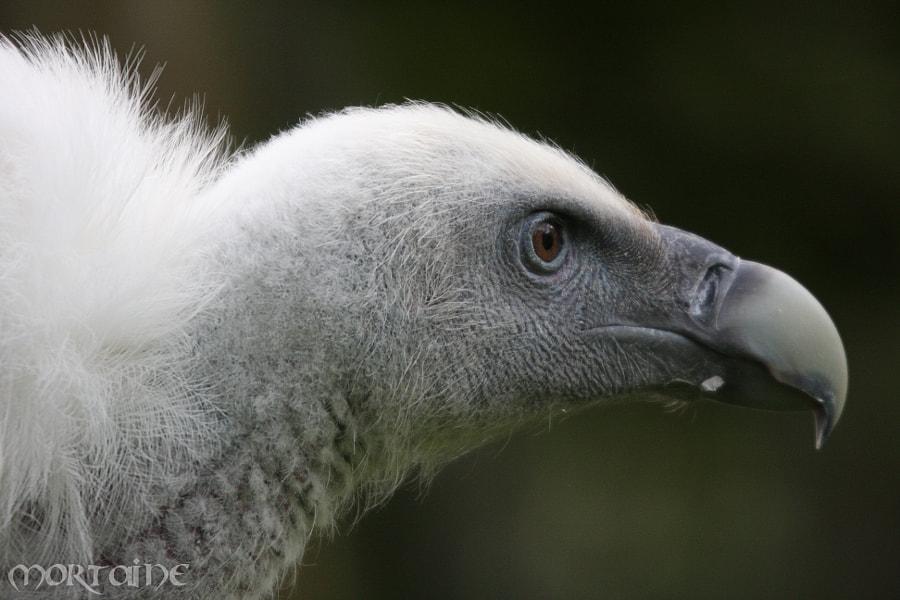 Vulture I