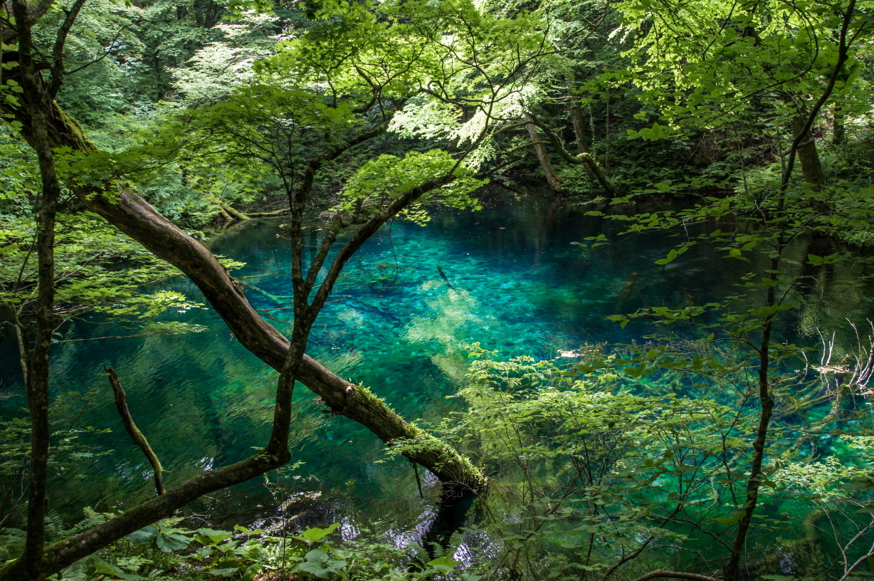 Photograph Blue moment by Takeshi Marumoto on 500px