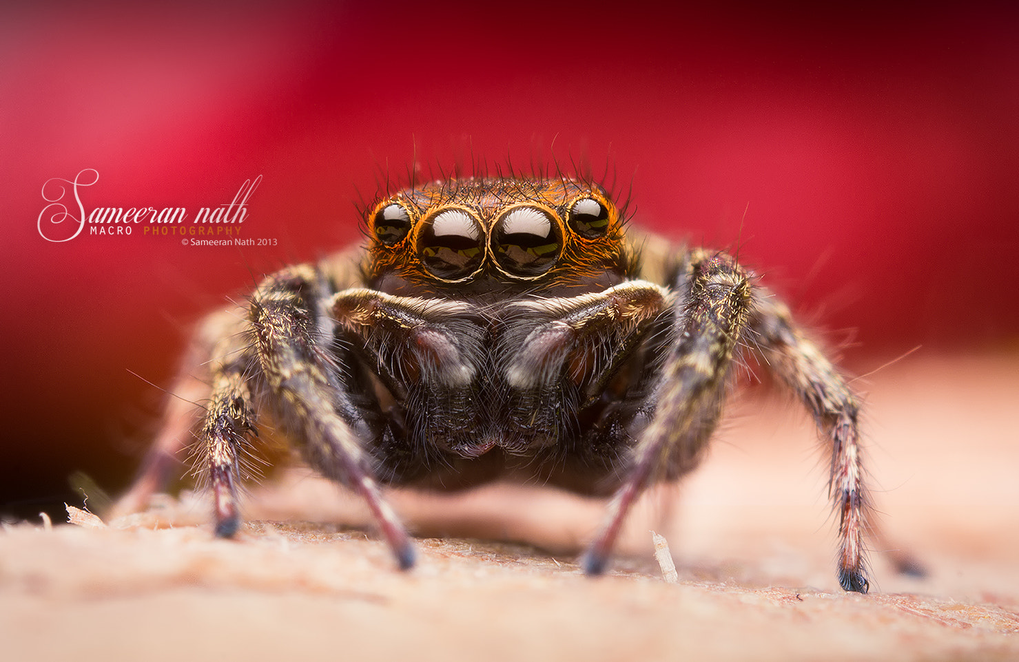 Photograph Little spider  by Sameeran Nath on 500px