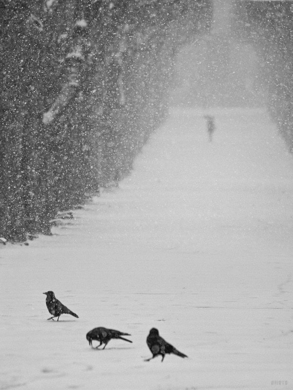 """Le Jardin des plantes was closed due to intense snow fall, but i could take that pic from the outside. They let some people cross the park.  <a href=""""http://nightgrain.tumblr.com/"""">Photoblog</a>"""
