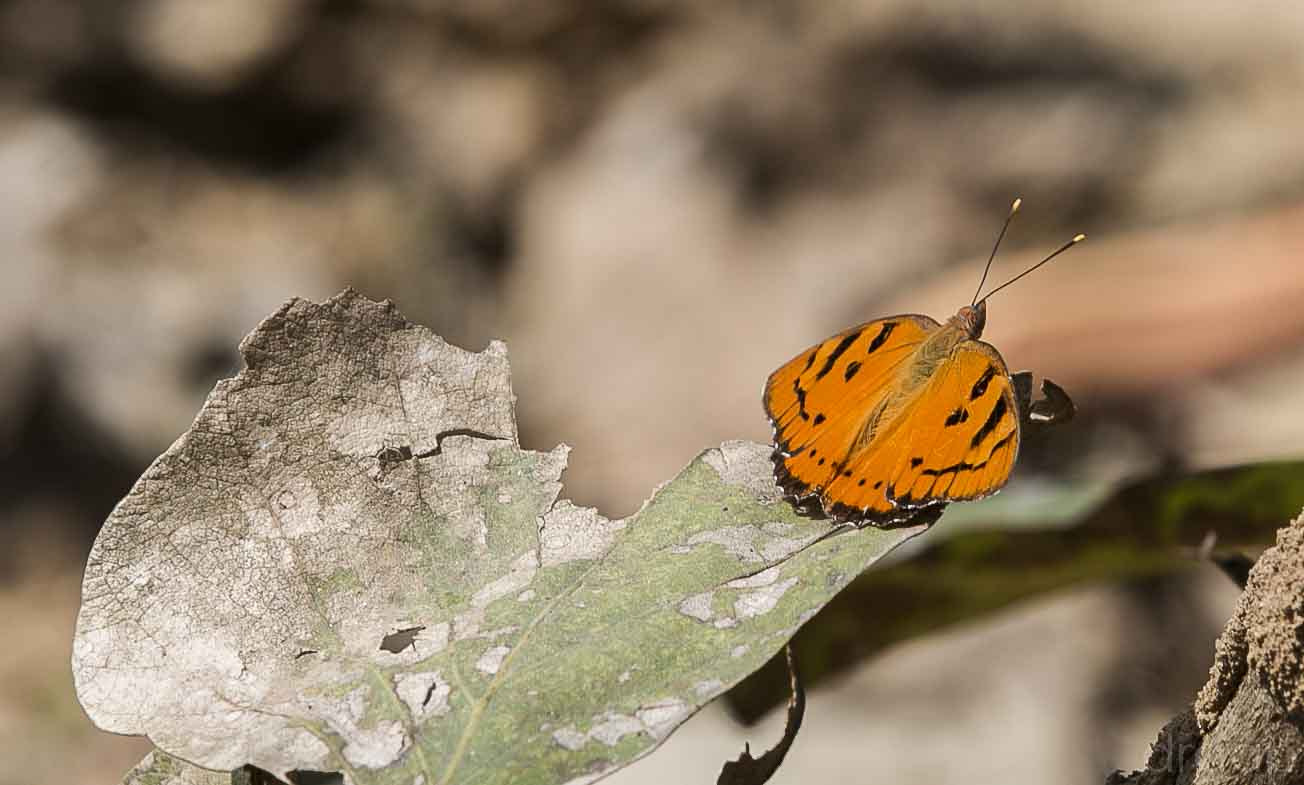 Photograph A ButterFly by Gunjan  Puri on 500px