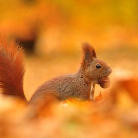 Autumn by Jacek Gnoinski on 500px.com