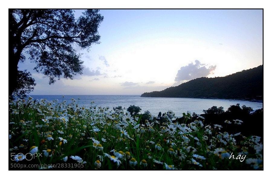 Photograph Le printemps dans mon village by HUSEYIN AY on 500px