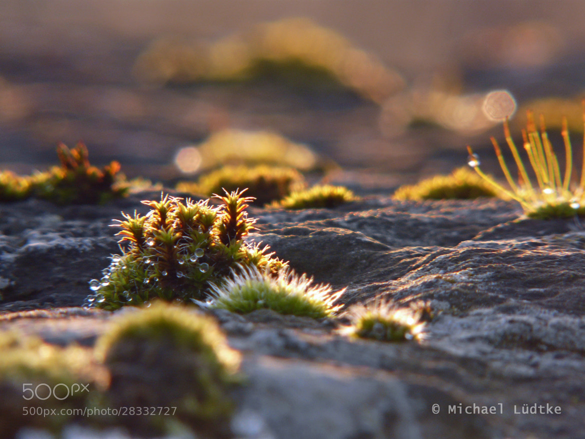 Photograph Moss in the Sunlight by Michael Lüdtke on 500px