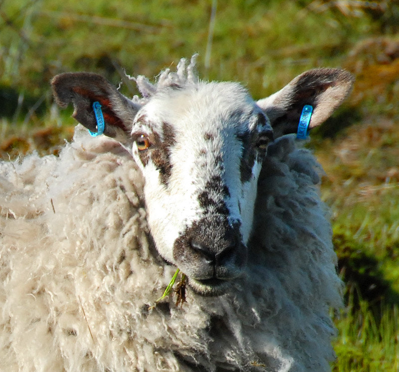 Photograph I'm a trendy sheep, like my new earrings/PIERCINGS? by Magda Indigo on 500px
