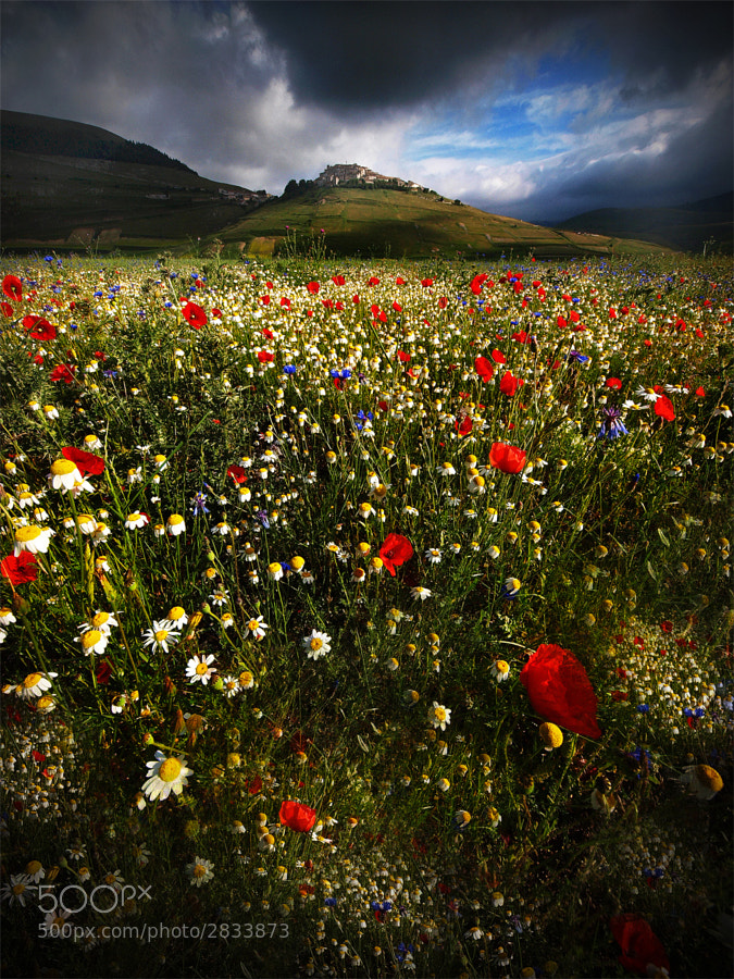 Photograph Memories of Summer # 2 .. by Edmondo Senatore on 500px