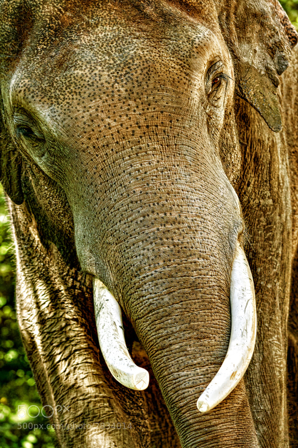 Photograph Elefant by Andreas  Welsch on 500px
