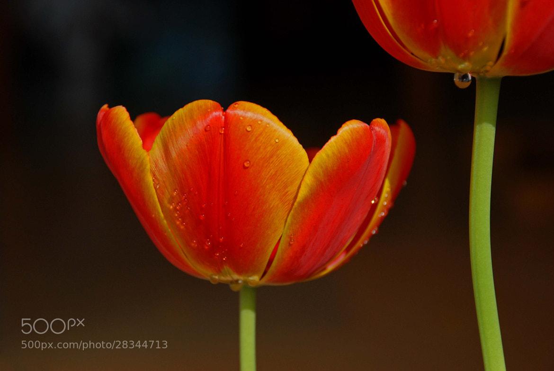 Photograph flower by Grazyna Turolska on 500px