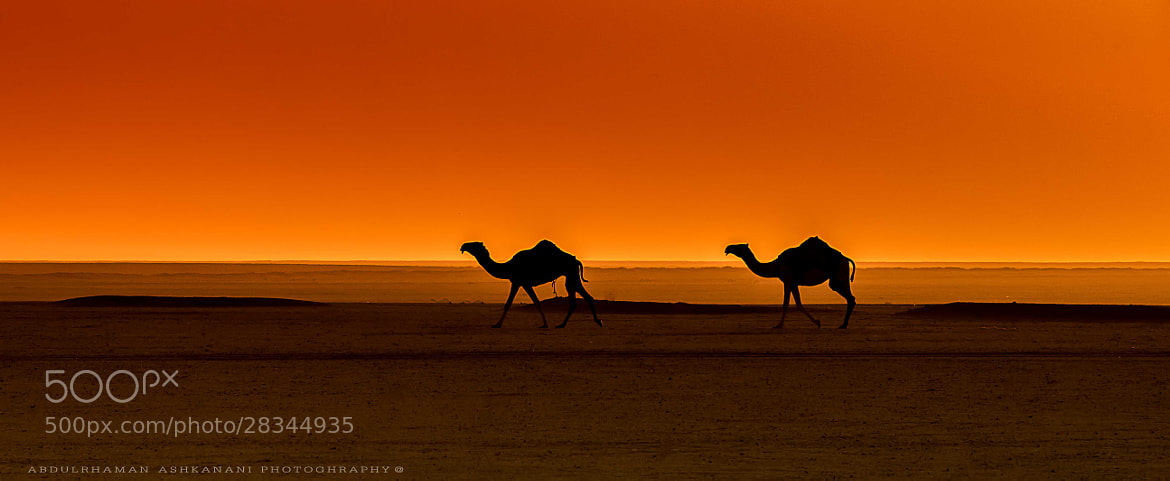 Photograph kuwait Desert by Abdulrahman Ashkanani on 500px