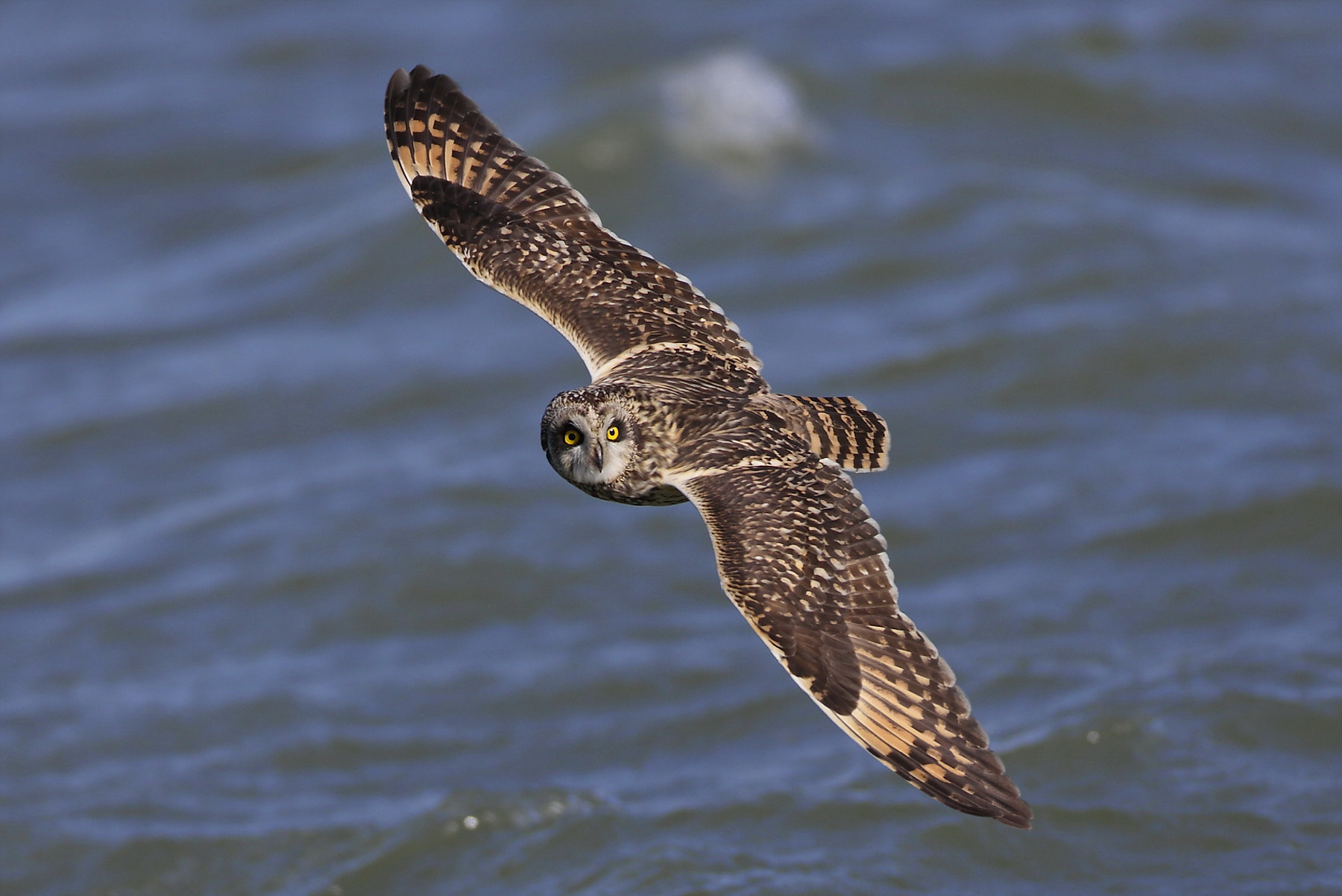 Photograph short-eared owl by Namgun Lee on 500px