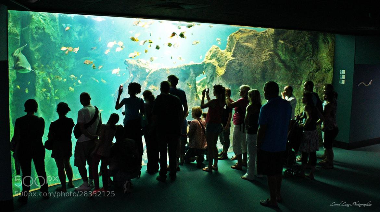 Photograph Aquarium by Lionel Lang on 500px