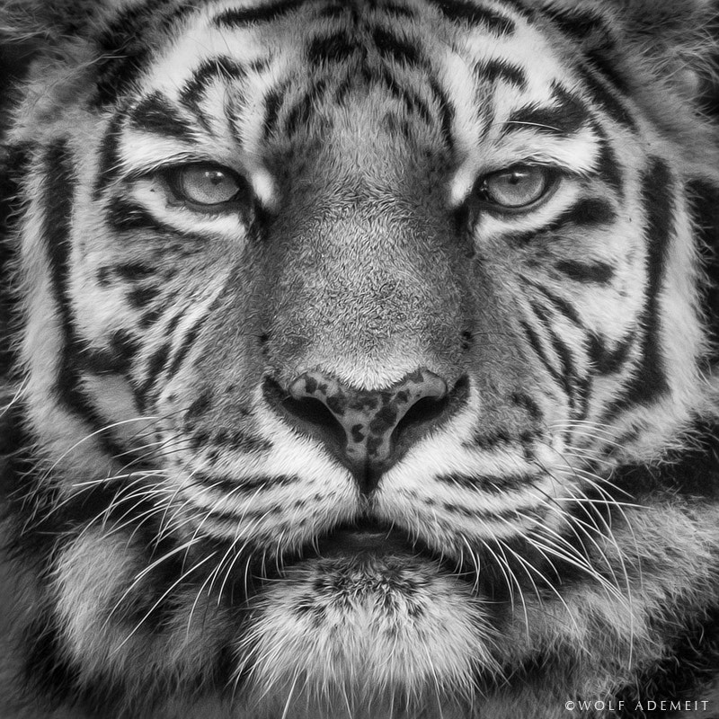 Photograph Gysa by Wolf Ademeit on 500px