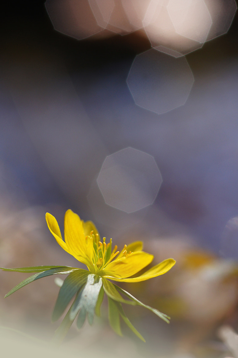 Photograph Spring signals by Andy 58 on 500px