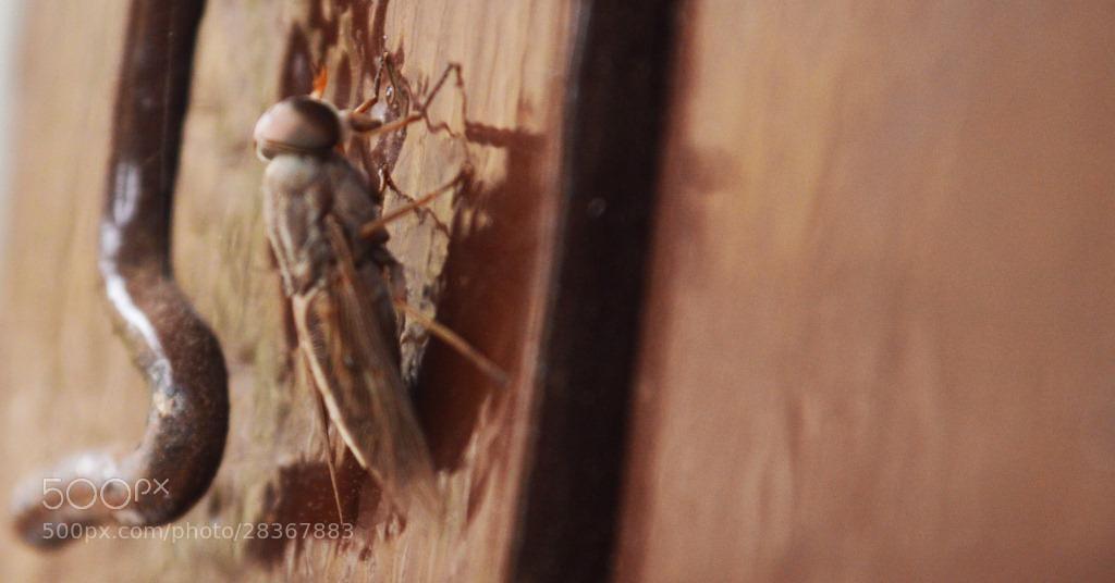Photograph Fly by Sankarragu on 500px