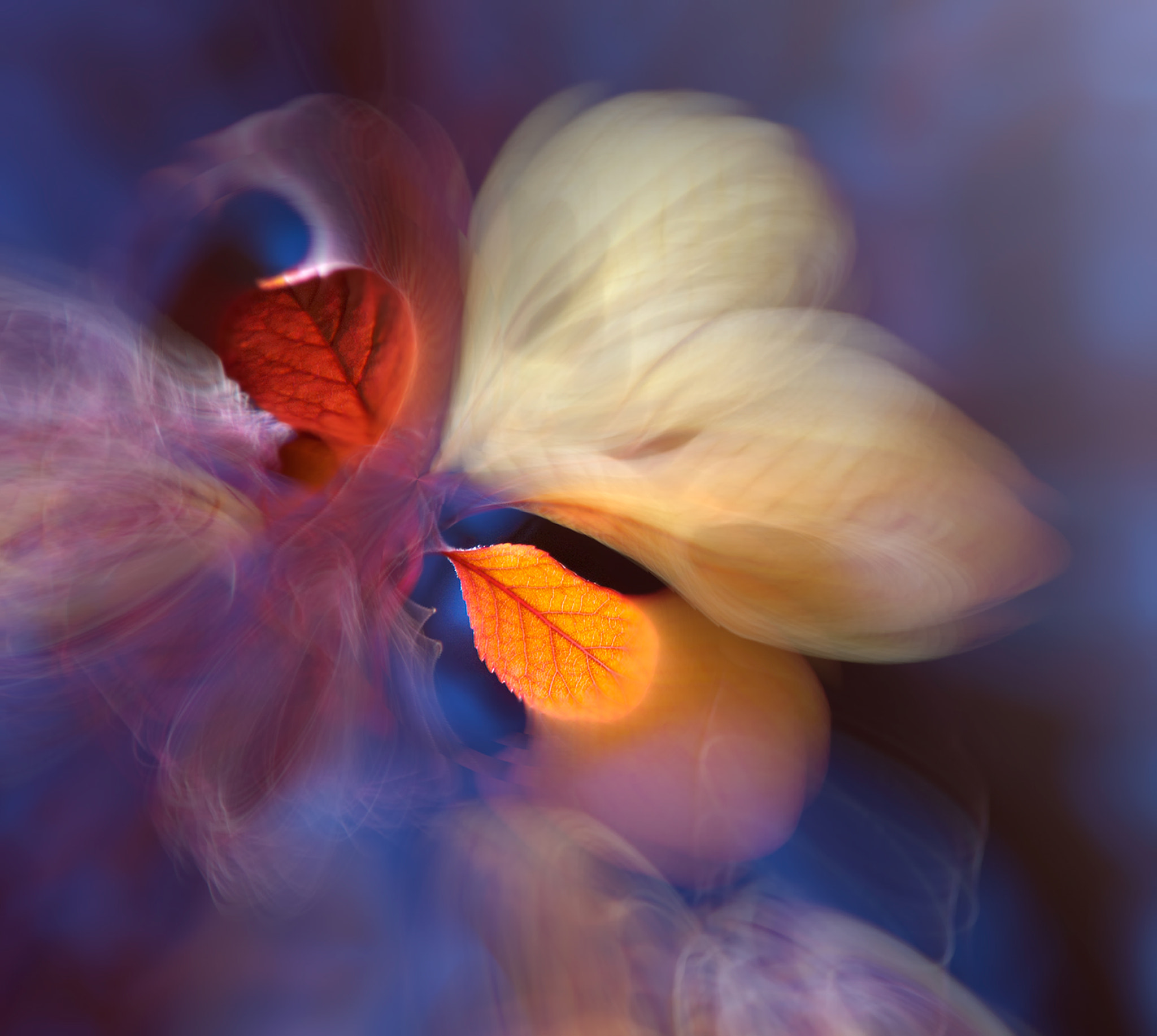 Photograph ::: Butterfly Effect ::: by Josep Sumalla on 500px