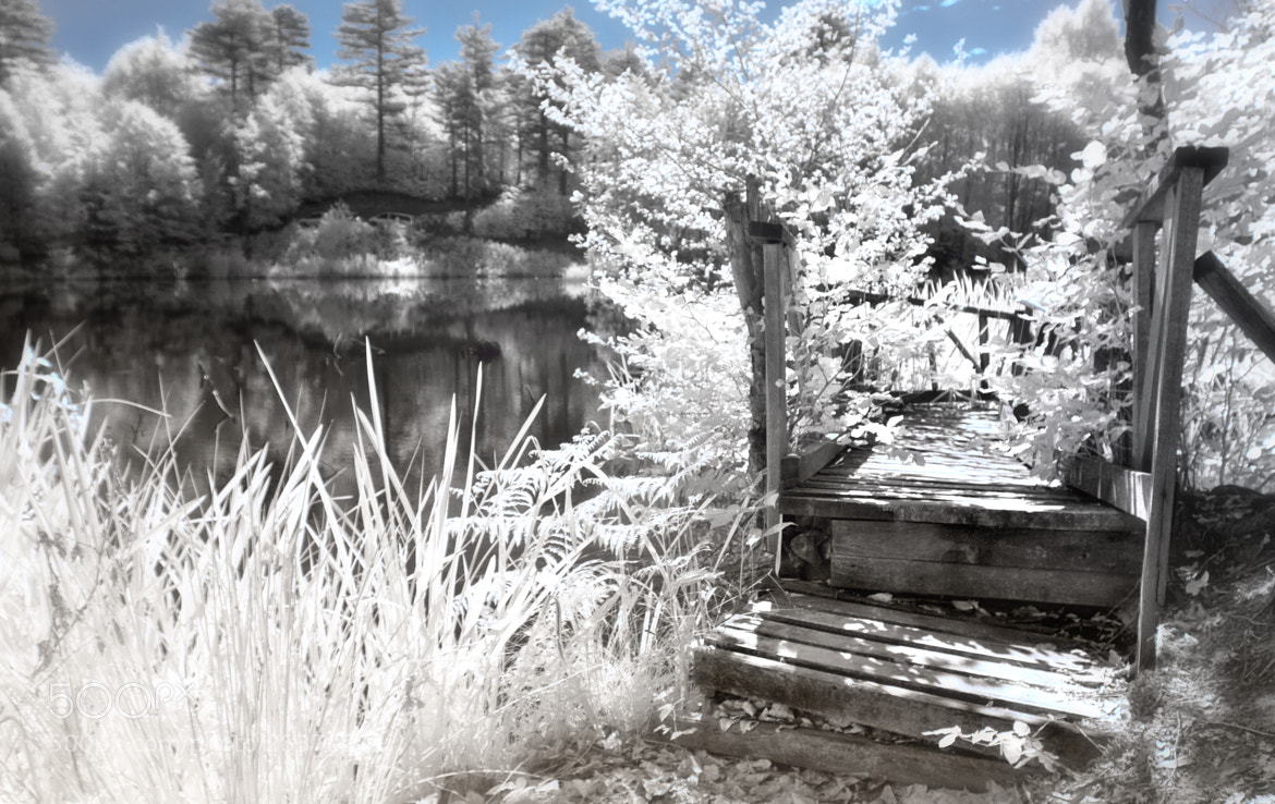 Photograph Spring Path...IR by Samet Güler on 500px
