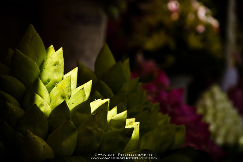 Photograph Light of Lotus! by Mardy Suong Photography on 500px