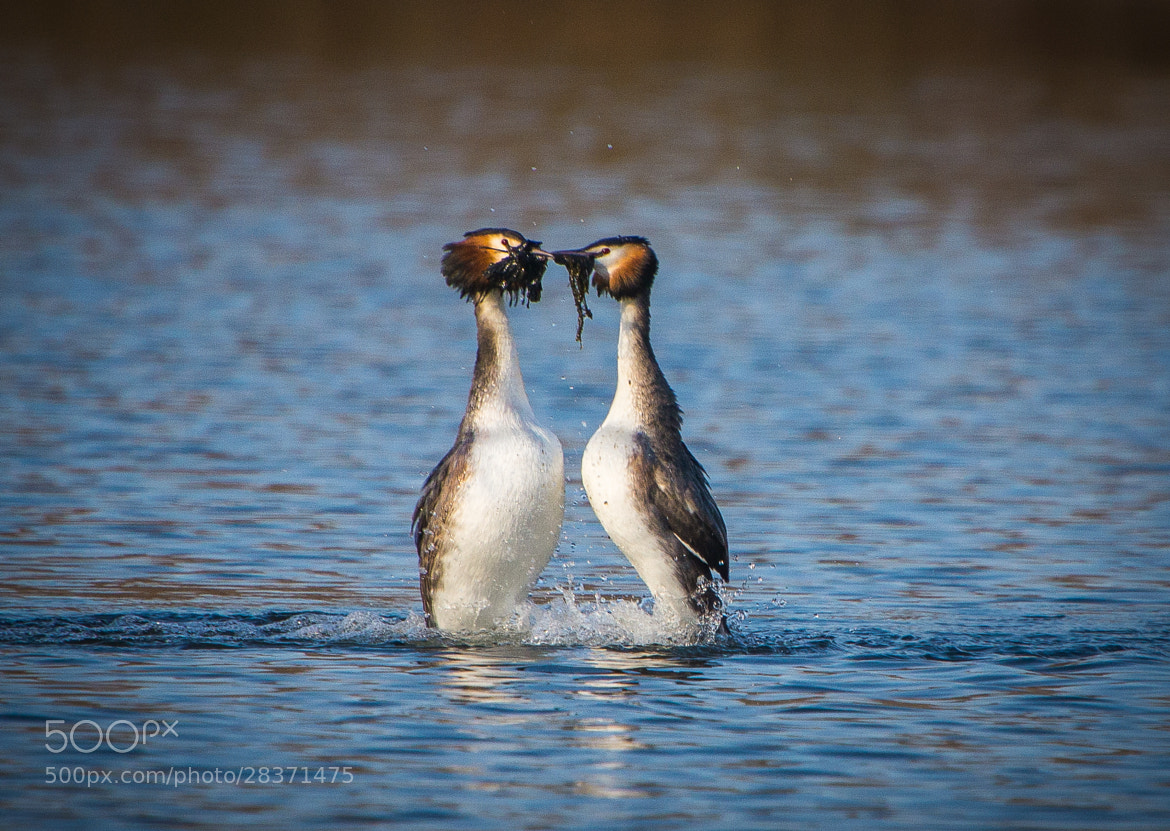Photograph Dance of Lovers by Ralf Bessoth on 500px
