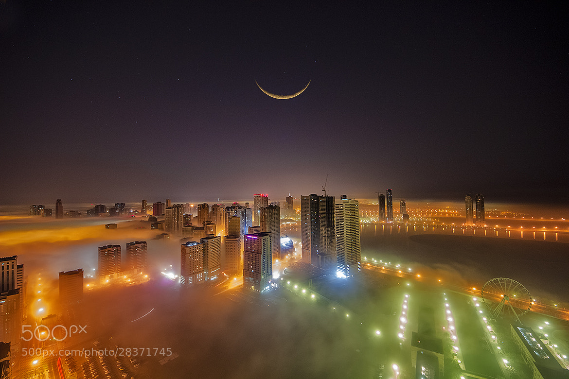 Photograph Fog 3:20 am by MO AOUN PHOTO on 500px