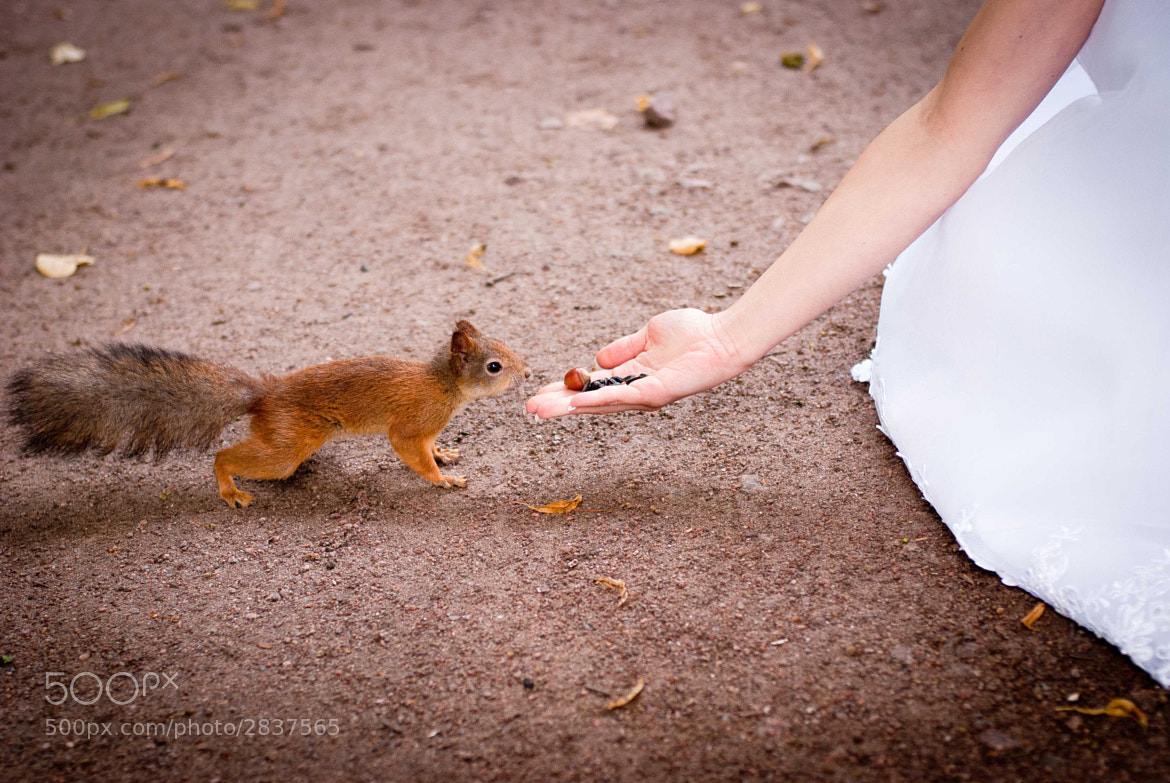 Photograph the squirrel by Vitaly Menshikov on 500px