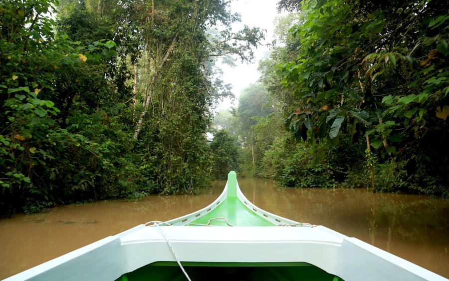 We felt this was THE Borneo experience! being on a small boat, floating down the Kinabatangan river...  and going in to the small streams/tracks off the river (like this one) and on each side... full of proboscis and other types of monkeys and birds etc etc
