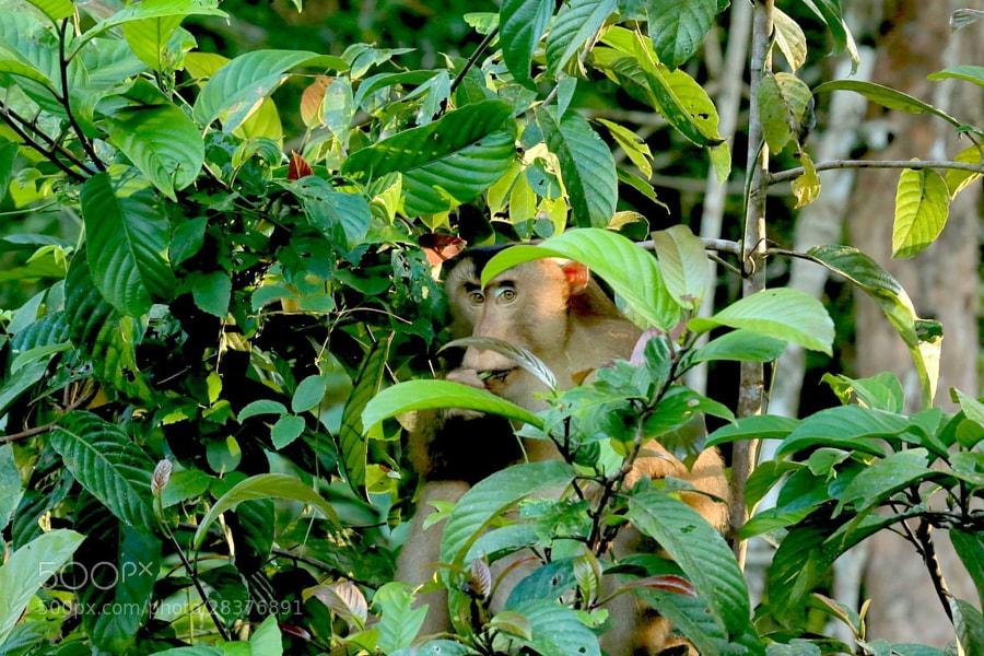 Very shy monkey :)