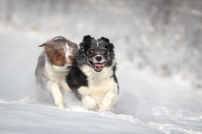 Photograph snow bo(a)rder .... by Mathias Ahrens on 500px