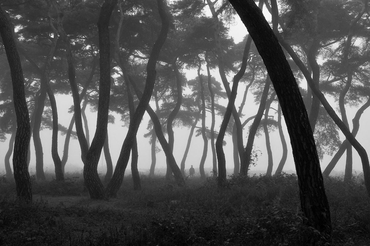 Photograph Alone in the pinetree forest by Jinha Park on 500px