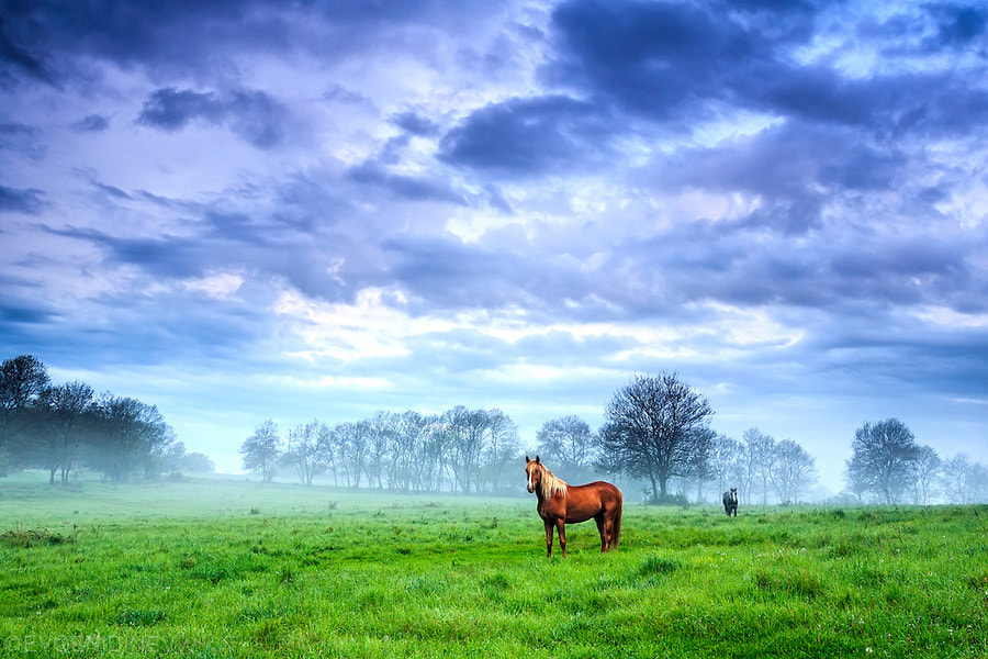 Photograph Green Morning by Evgeni Dinev on 500px