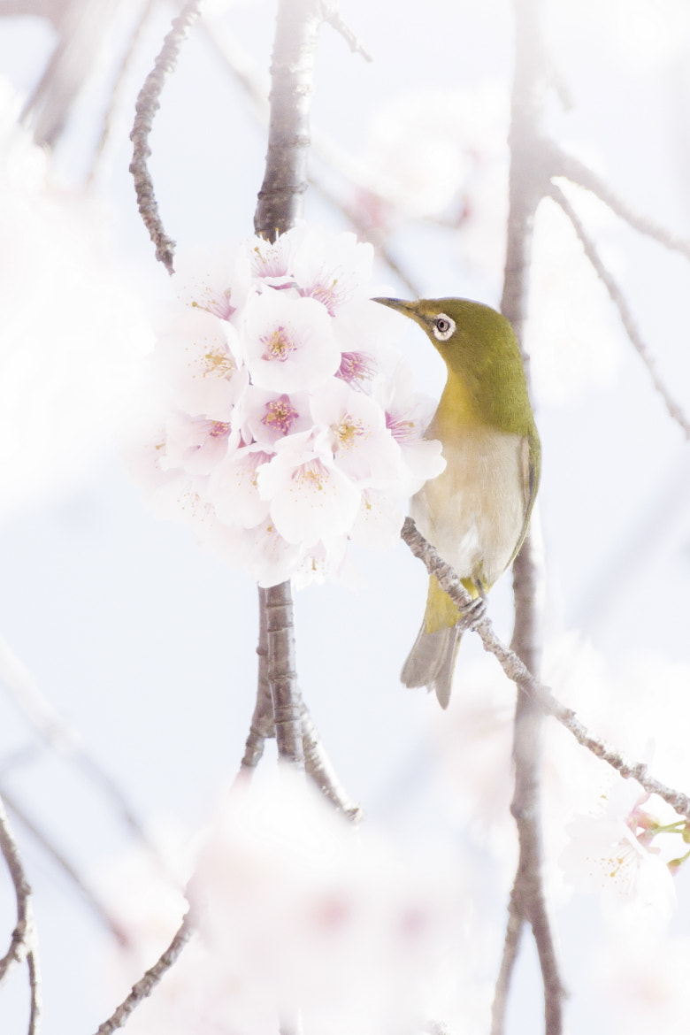 Photograph Spring hours by Takeshi Marumoto on 500px