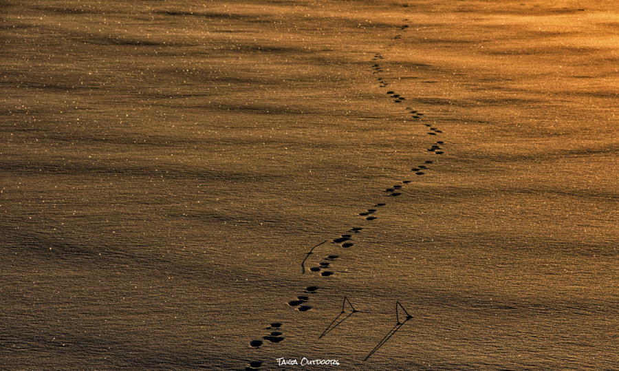Traces in the snow by Taiga on 500px.com