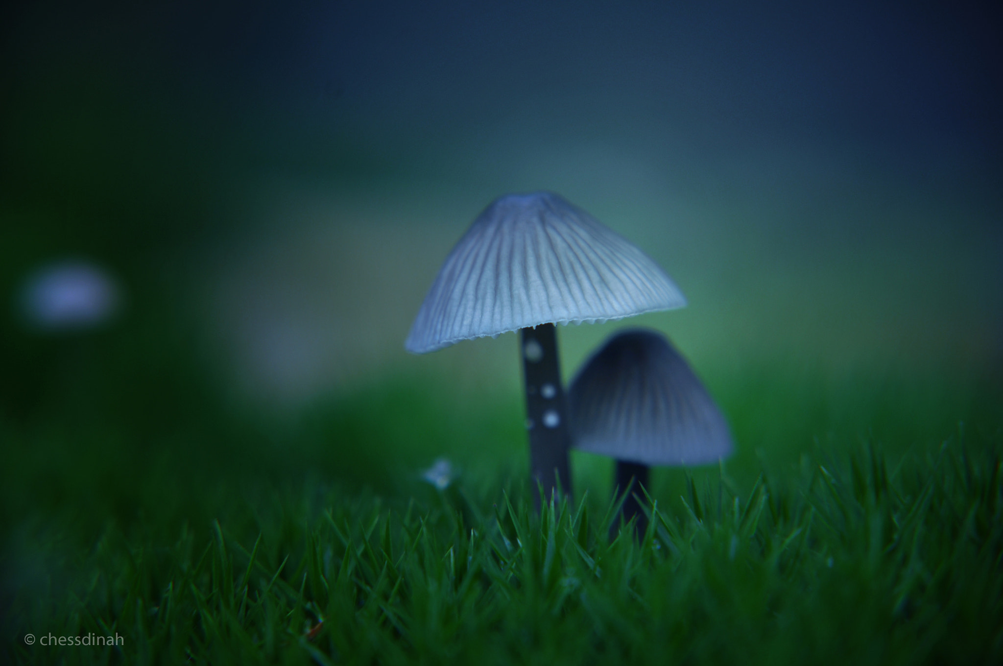 Photograph Strangeness and charm. by Sylvia Wieringa on 500px