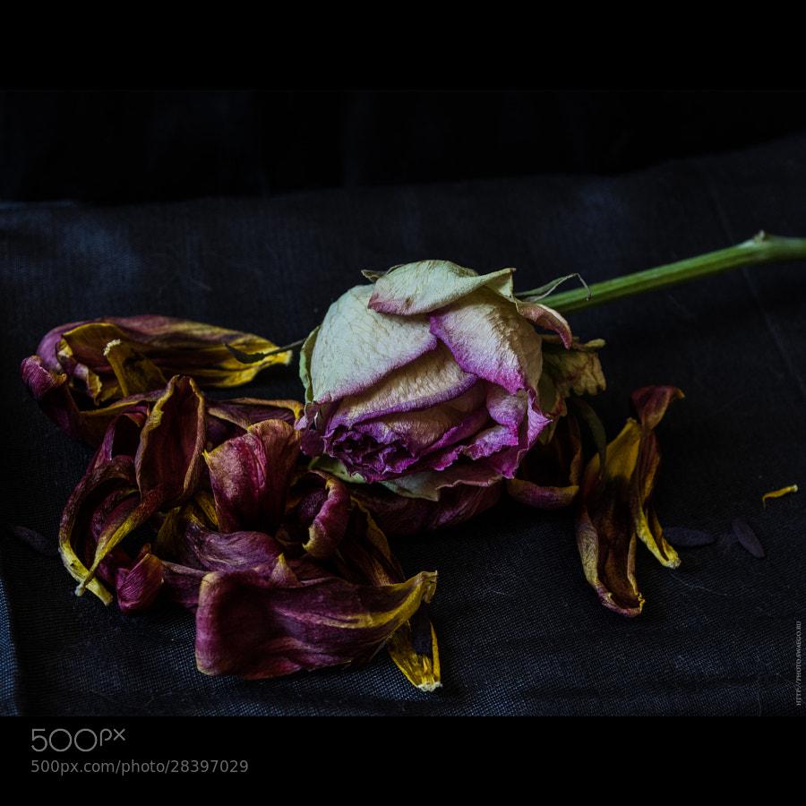 Dead flowers by Tolik Maltsev on 500px.com