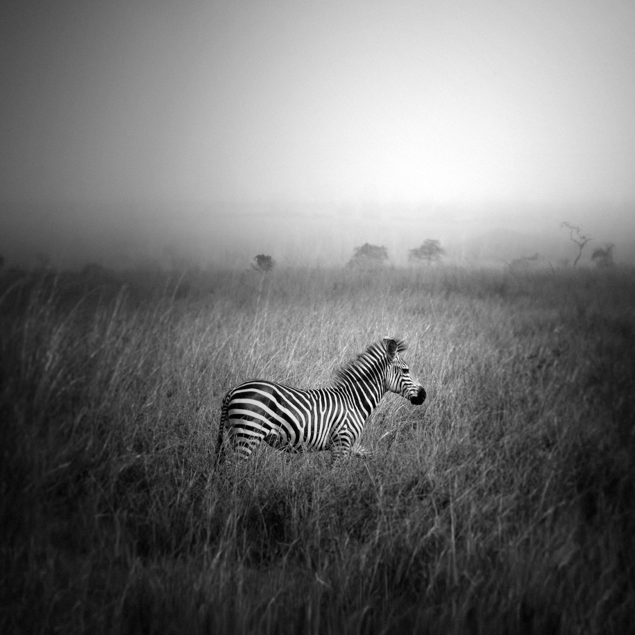 Photograph pundamilia by Andy Lee on 500px