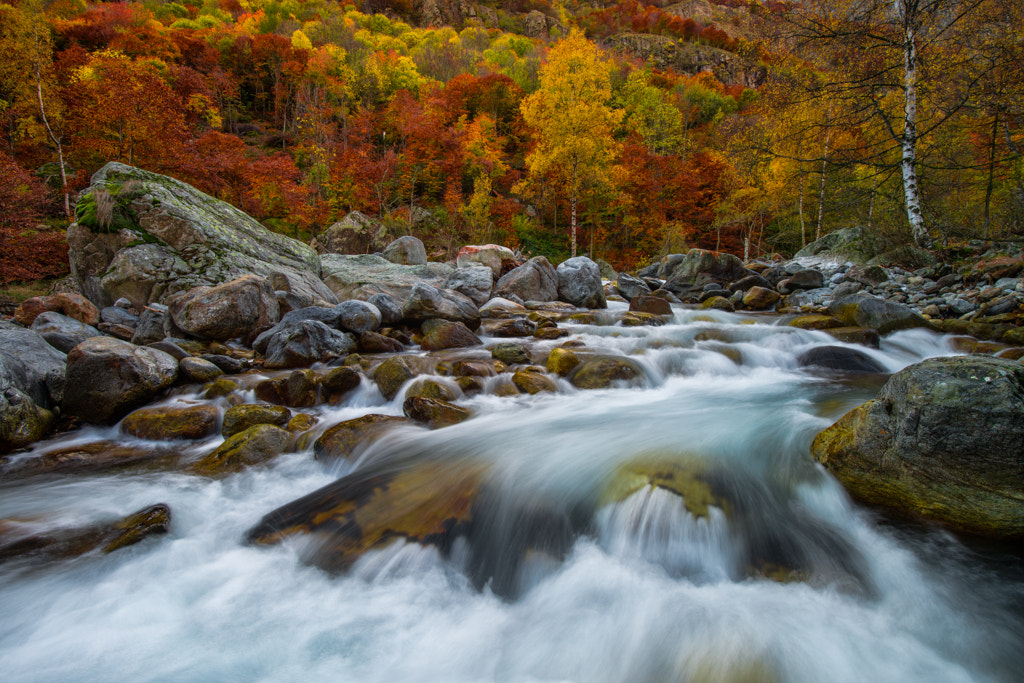 Photograph Gesso valley by Matteo Musetti on 500px